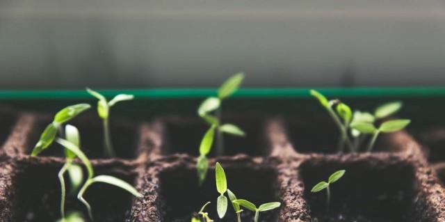 Προστάτευσε τα φυτά σου με αυτό το σπιτικό εντομοκτόνο - Θέλει σκόρδο, κρεμμύδια και πιπεριά
