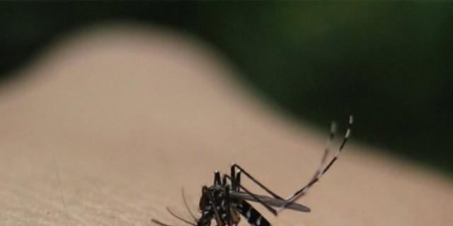 Συναγερμός στη Λάρισα - Κρούσμα του ιού του Δυτικού Νείλου