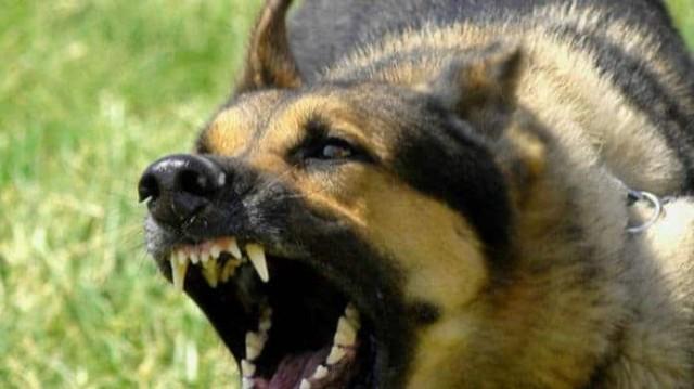 Θρίλερ στις Σέρρες! 9χρονο δέχτηκε επίθεση από σκύλο! Ποια η κατάστασή του;