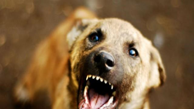 Σοκ στο Πήλιο! Ήταν νεκρή μέσα στο σπίτι της και ο σκύλος της έφαγε το πρόσωπο!
