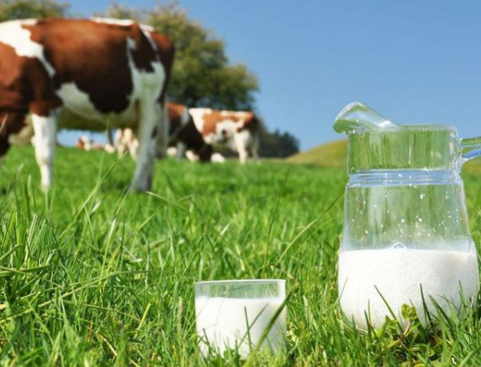 Εσύ το ήξερες; Να γιατί δεν πρέπει να πίνουμε αγελαδινό γάλα!