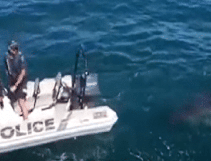 Βίντεο που κόβει την ανάσα: Λευκός καρχαρίας φτάνει επικίνδυνα κοντά σε φουσκωτό της ακτοφυλακής!