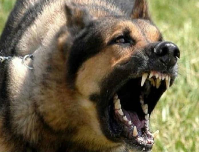 Σοκ! Σκύλος δάγκωσε νεογέννητο στο πρόσωπο!