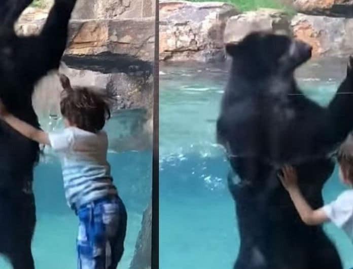 Υπέροχο βίντεο: Πελώρια αρκούδα μιμείται ένα παιδάκι και χοροπηδά μαζί του!