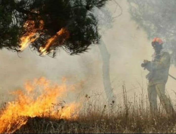 Φωτιά στην Ηλεία! Μεγάλη η κινητοποίηση της Πυροσβεστικής!