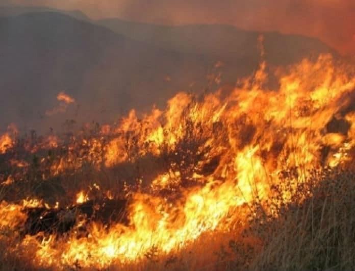 Πύρινος εφιάλτης! Ισχυρή πυρκαγιά στη Βραυρώνα!
