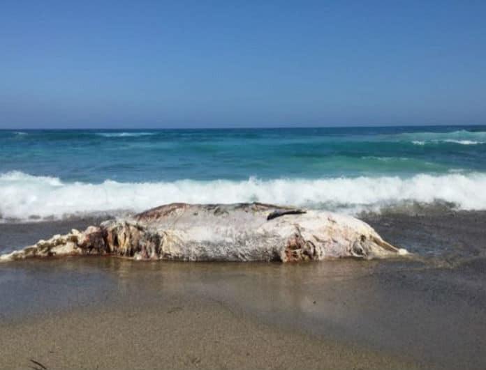 Συνεχίζεται η τραγωδία στην Κρήτη: Δεύτερος νεκρός σε θάλασσα μέσα σε μια μέρα!
