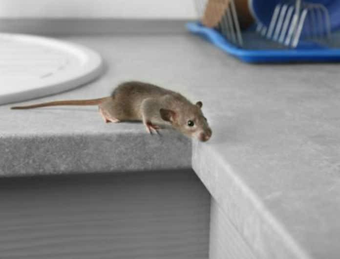 Ξεφορτωθείτε μια και καλή τα ποντίκια από το σπίτι! Σας βρήκαμε την λύση!
