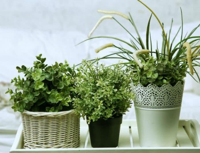 Αυτά τα φυτά είναι βόμβες οξυγόνου! Μήπως πρέπει να πάρεις κι εσύ ένα σπίτι σου;