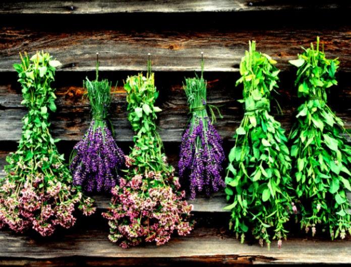 Αρωματικά της ελληνικής γης: Τα θρεπτικά συστατικά που επιβάλλουν να μην απουσιάζουν από την κουζίνα μας!