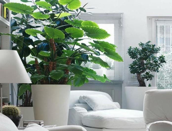 Διακοσμητικά φυτά για το δωμάτιό σας για να έχετε καλύτερο ύπνο!