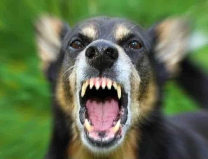 Φρίκη! Σκυλιά κατασπάραξαν 14χρονο που πήγε να τα ταΐσει!