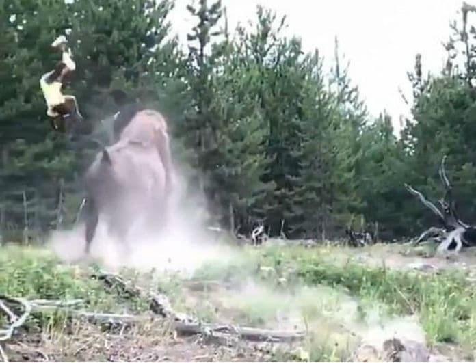 Βίντεο σοκ! Γονείς έτρεχαν να σωθούν ενώ βίσονας πετούσε στον αέρα την 9χρονη κόρη τους!