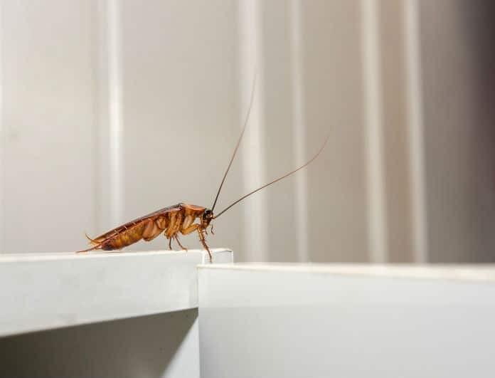 Σταματήστε ότι κάνετε: Αυτά είναι τα 6+1 πράγματα που προσελκύουν τις κατσαρίδες!