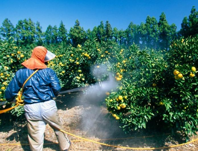 Κόκκινος συναγερμός: Αυτά είναι τα φρούτα που έχουν ψεκαστεί με φυτοφάρμακα!