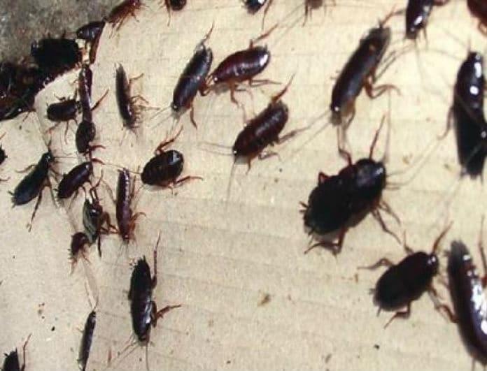 Έχετε φτάσει στο όριο με τις κατσαρίδες; 3 φυσικοί τρόποι για να τις διώξετε μια και καλή!