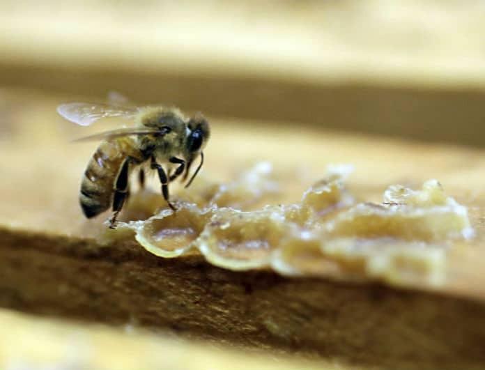 Οι μέλισσες έχουν γίνει ο εφιάλτης σας; Αυτός είναι ο τρόπος για να τις εξοντώσετε!