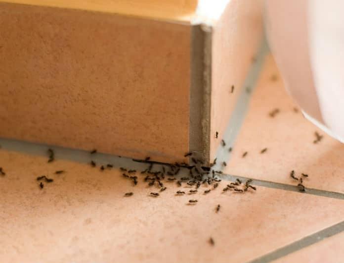 Αυτό είναι το μυστικό για να εξαφανιστούν στο λεπτό τα μυρμήγκια από το σπίτι!