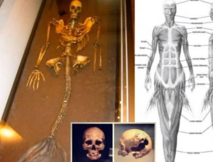 Βίντεο σοκ:  Βρέθηκε σκελετός γοργόνας και σας τον παρουσιάζουμε!