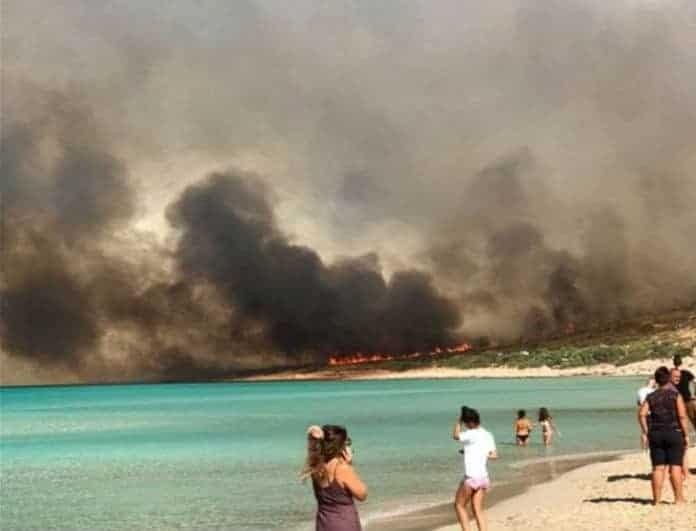 Αποκαλύψεις που σοκάρουν για τις φονικές πυρκαγιές! Έκαψαν έκταση πρασίνου ίση με...