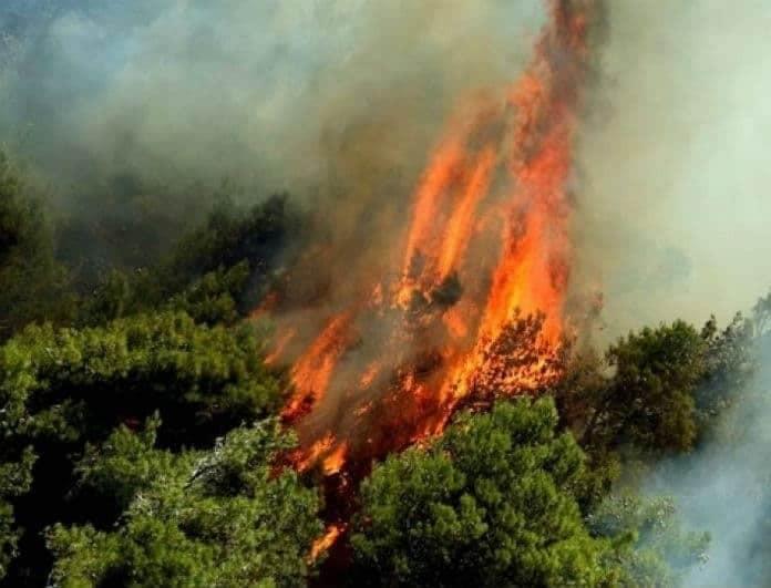Φωτιά στο Κρυονέρι! Οι φλόγες «γλείφουν» το δάσος! Εντοπίστηκε απανθρακωμένο σώμα!