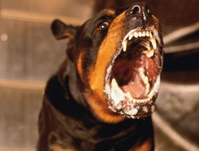 Τραγωδία Γλυκά Νερά: Ανατριχιαστικές λεπτομέρειες! Τι είχε ο σκύλος που «έφαγε» το παιδάκι;