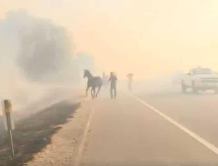 Το βίντεο της ημέρας! Άλογο έσωσε οικογένεια από φωτιά!