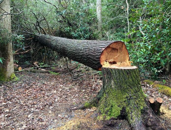 Τραγωδία στα Καλάβρυτα: Καταπλακώθηκε από δέντρο και πέθανε!