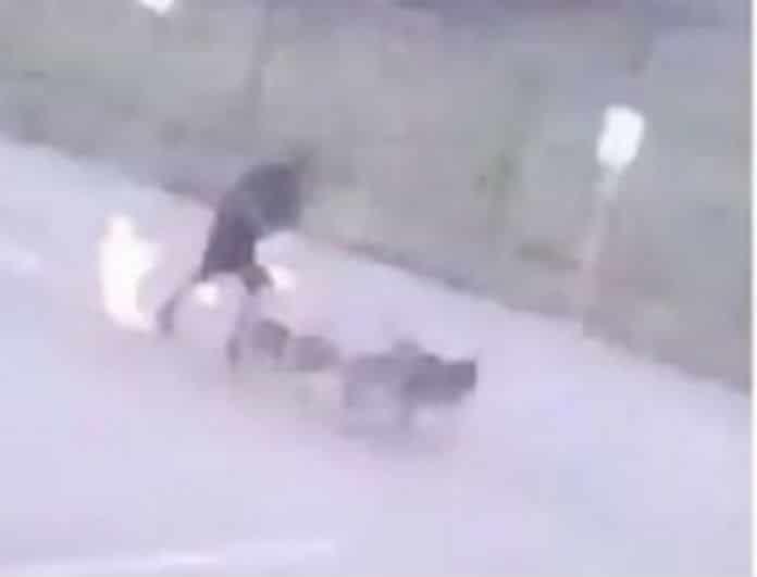 Βίντεο που σοκάρει! Τον χτύπησε κεραυνός και άρπαξε φωτιά!