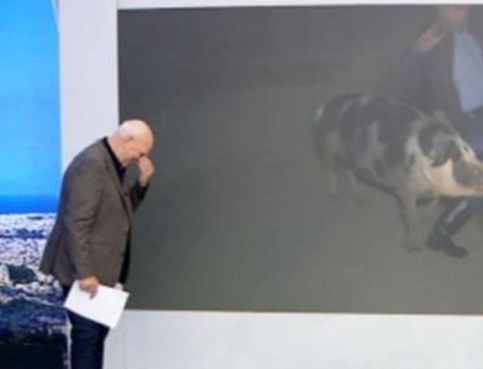 Αδιανόητο! Γουρούνι κυνήγησε και δάγκωσε τον ρεπόρτερ του Γιώργου Παπαδάκη - Τσίριζε on air!