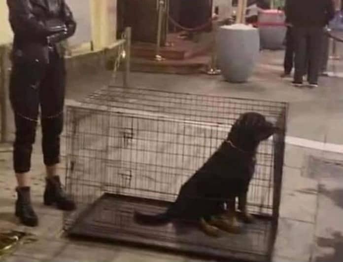 Σάλος στην Θεσσαλονίκη! Κέντρο διασκέδασης έκλεισε σκυλιά μέσα σε κλουβιά!