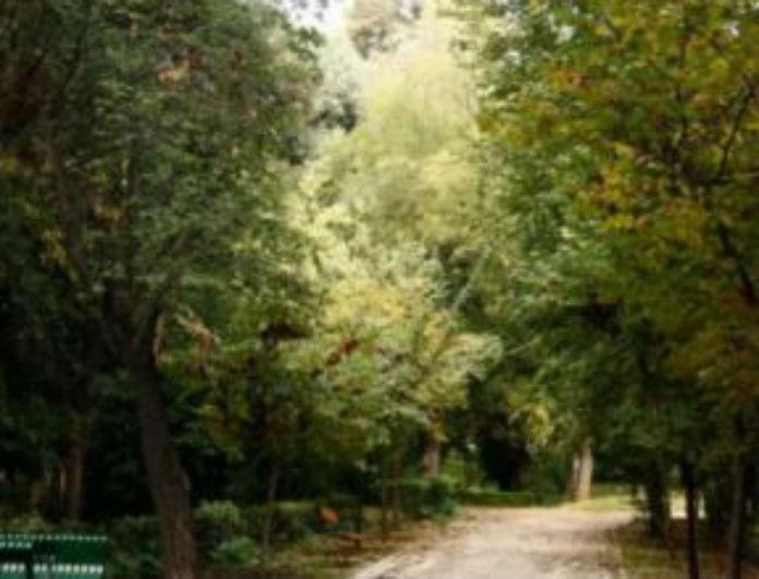 Φρίκη στο Καλλιμάρμαρο: Βρέθηκε νεκρή γυναίκα κρεμασμένη με λουρί σκύλου!