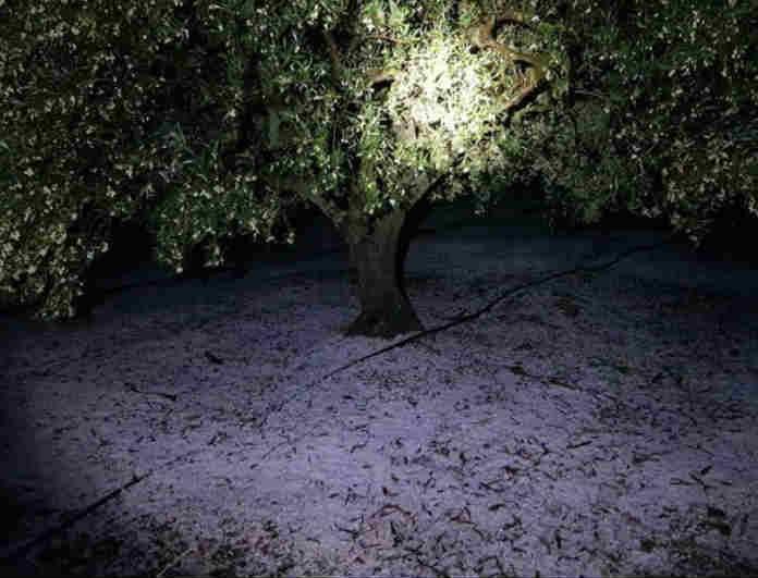 Κρήτη: Η κακοκαιρία Διδώ