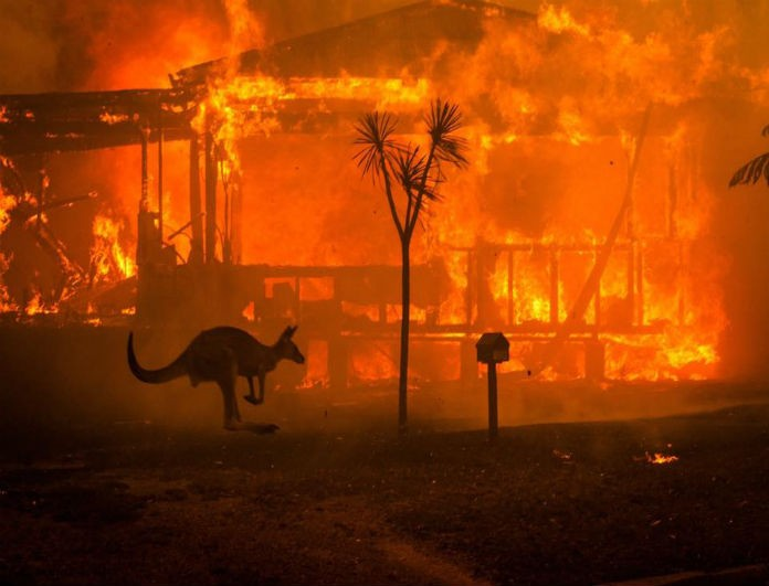 Αυστραλία: Σπαραγμός για τα καμένα ζώα! Εικόνες που σοκάρουν!