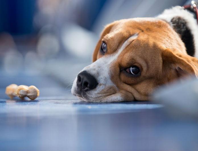 Νεκρά οκτώ σκυλιά από φόλες στο Αττικό Άλσος!