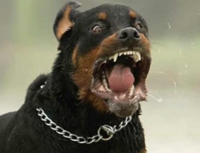 Σοκ στο Ηράκλειο: Σκύλος επιτέθηκε σε 13χρονο! Τι συνέβη;