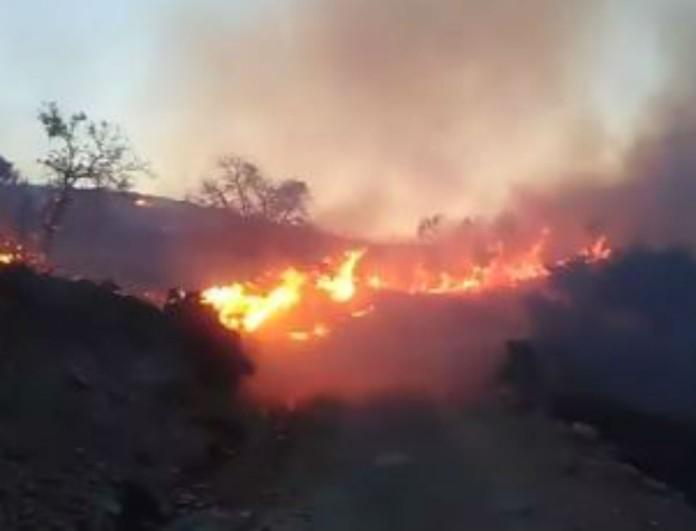 Μάχη με τις φλόγες έδωσαν οι Πυροσβέστες στο Λασίθι - Κάηκαν πάνω από 70 στρέμματα