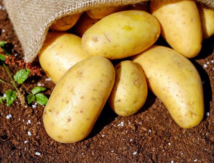 Αν έχουν αυτό το χρώμα οι πατάτες σου είναι επικίνδυνες!