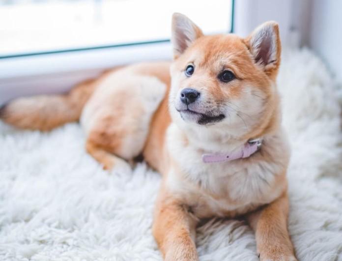 Εξαφανίστε την άσχημη μυρωδιά του σκύλου σας με μαγειρική σόδα - Η πιο έξυπνη λύση