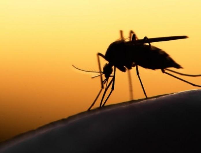 Νέο κρούσμα ιού του Δυτικού Νείλου