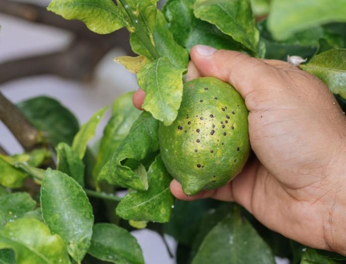 Προστάτευσε τα φυτά σου από ψώρα με μαγειρική σόδα - Το απίστευτα οικονομικό κόλπο που θα