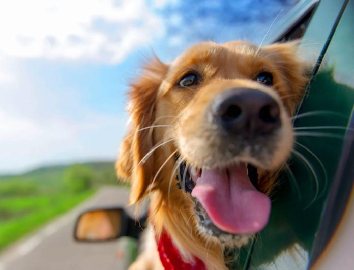 Προσοχή! Ο σκύλος σας πρέπει να τρώει κάθε μέρα ελαιόλαδο αν δεν θέλετε να πάθει αυτό!