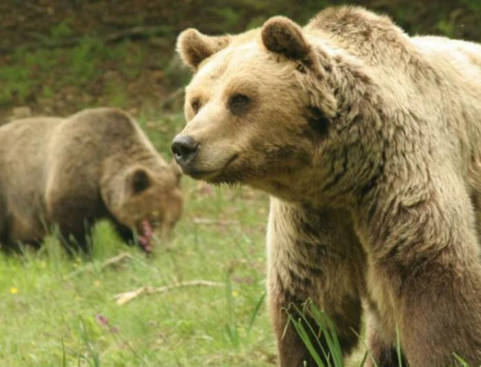 Τραγωδία σε ζωολογικό κήπο! - Αρκούδες σκότωσαν 11χρονο