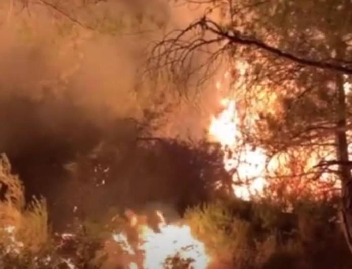 Φωτιά στον Εβρο: Δύο ενεργά μέτωπα - Μάχη για να σωθεί το δάσος της Δαδιάς