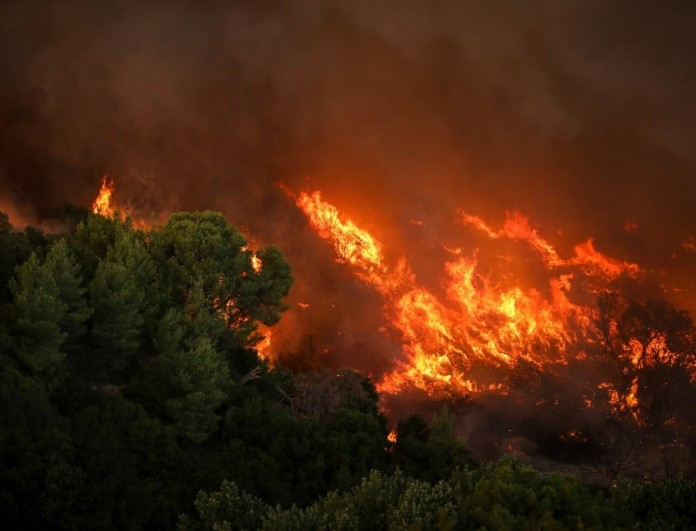 Φωτιά σε δάσος κοντά στο Μαρτίνο Φθιώτιδας