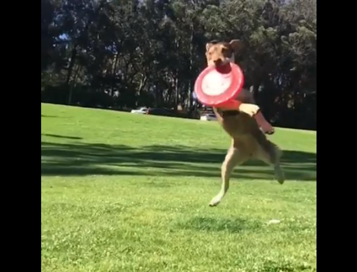 Ο παιχνιδιάρης σκύλος που έχει γίνει viral! - Μπορεί ακόμα και να... πετάξει! (Video)