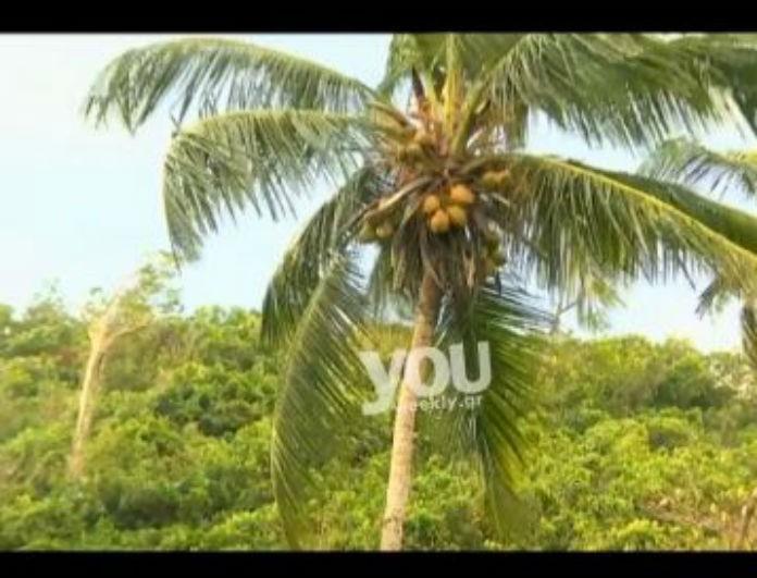 Survivor 2: Η αδιανόητη γκάφα των Διάσημων! Έκοψαν ολόκληρο δέντρο με καρύδες και...(Βίντεο)