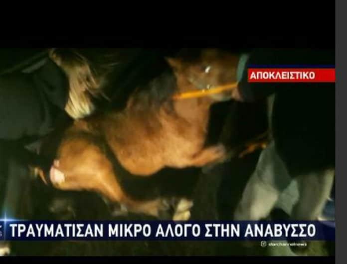 Ανάβυσσος: Συγκινητικές στιγμές! Ασυνείδητος χτύπησε και παράτησε στην τύχη του αιμόφυρτο μικρό άλογο... (βίντεο)