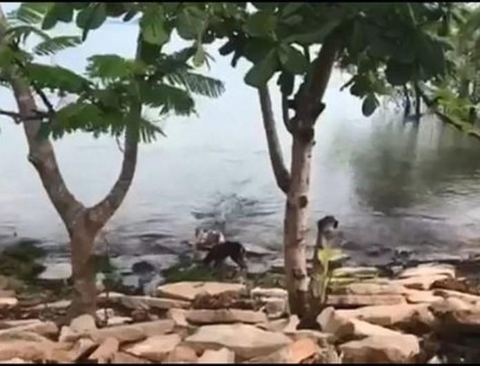 Σοκαριστικό βίντεο: Κροκόδειλος άρπαξε σκύλο από την όχθη του ποταμού!