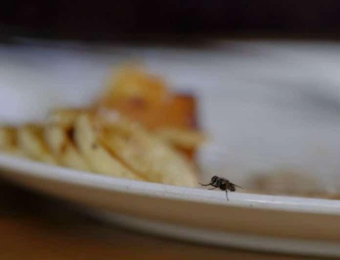 Μεγάλη προσοχή! Αν κάτσει μύγα στο φαγητό μην το φάτε! Μπορεί να πάθετε...